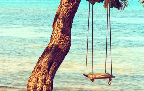 on a tree swing by the ocean