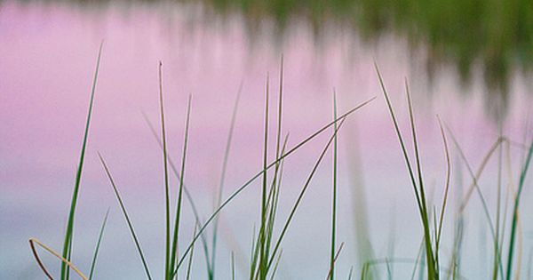 Early morning. water photography grass
