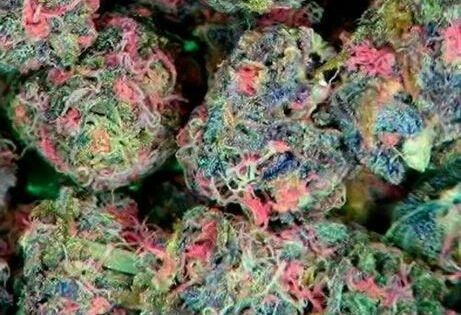 Fruity Pebble Kush | Marijuana ♡ | Pinterest