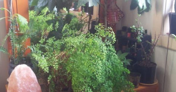 Maiden hair fern and salt lamp House Plants Pinterest Fern, Maidenhair fern and Houseplants