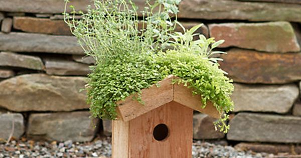 Cute herb house