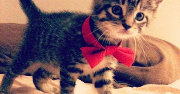 Love animals in bowties!