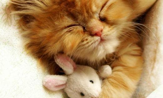 sleepy time kitten and bunny