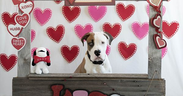 Pin By Jo Allen On Kissing Booth Dog Valentines Valentines Photo Booth Dog Photoshoot