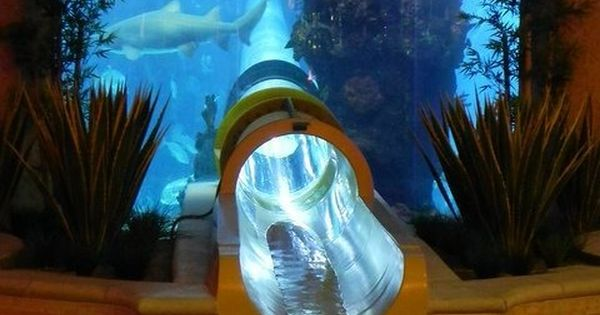 Water Slide Through Shark Tank. How freaking awesome is this? It's like