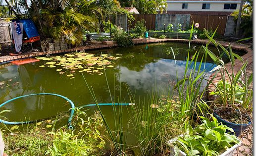 Convert Your Pool Into A Natural Pond We Have Actually Already Begun To Do This With Ours If