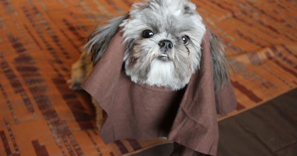ewok dog costume shih tzu how to make a no sew dog ewok costume seriously shih 9908