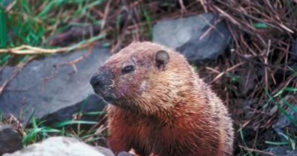 How To Keep Groundhogs From Eating Plants Plants Gardens And Garden Ideas