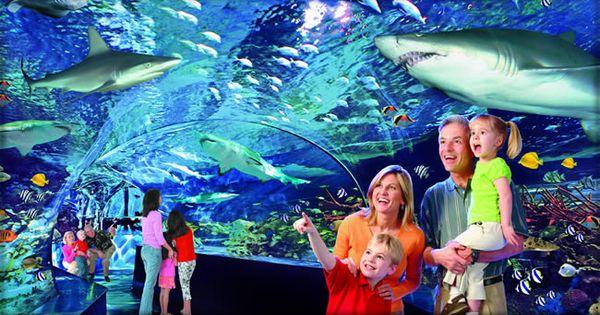 Ripley 39 S Aquarium Of Myrtle Beach Home Ripley 39 S Aquarium