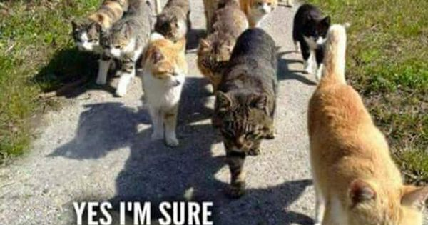 Cats Fred Are You Sure About This Yes Im Sure Theres A 40