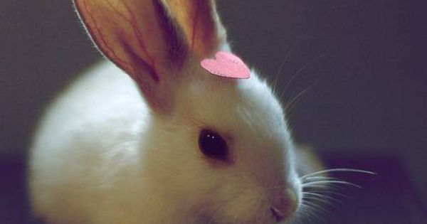 ah cute bunnies! little animals make my life!