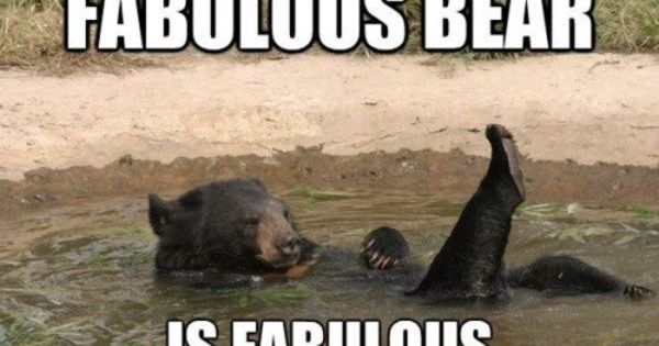 fabulous bear! Made me laugh