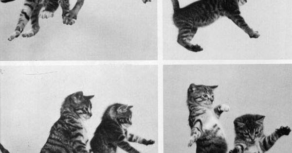 Kittens: let's dance