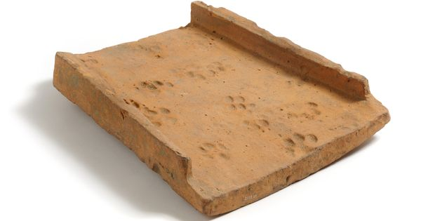 Roman Roof Tile Displaying Multiple Dog Paw Prints And A