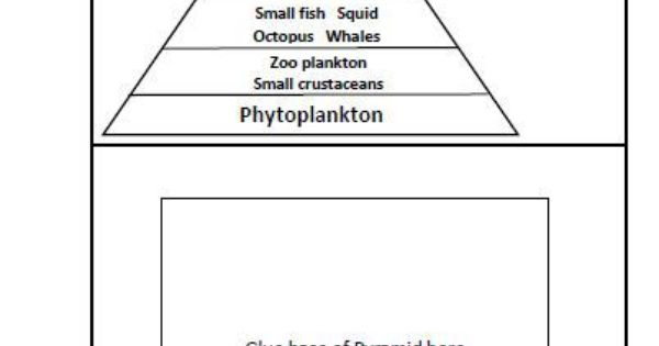 chip midnight templates - ocean food pyramid template for lapbook or notebook page