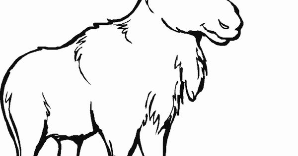 Moose coloring page Free Printable Coloring Pages Cute