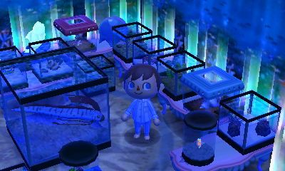 A Cool Aquarium From The Dream Town Of Pink Sea Dream Address