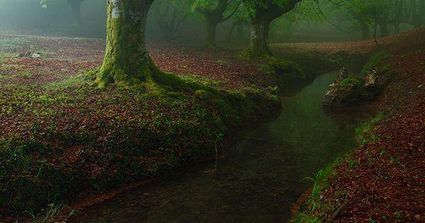 Otzarreta Forest / Bizkaia, Spain --Enchanted forest!