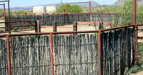 Cedar Stay Fence Cattle Google Search And Ranch