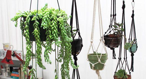 Hanging succulent garden garden herb cactus succulent macrame DIY tutorial hanging plant