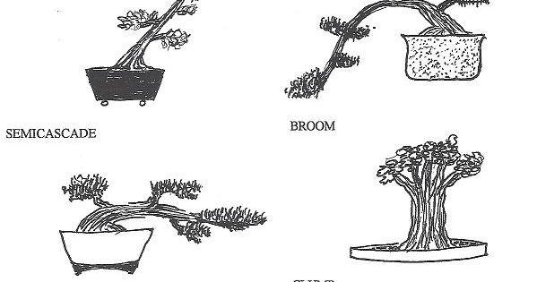 bonsai styles