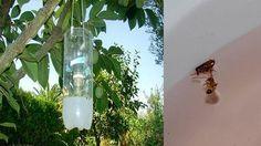 Como Acabar Con Las Pulgas En La Yarda En La Casa De Mi Suegra Nunca Habia Moscas Mosquitos U Algun Tipo