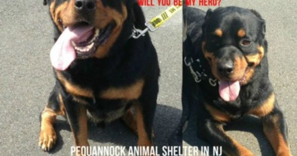 Pin On Animals In Desperate Need