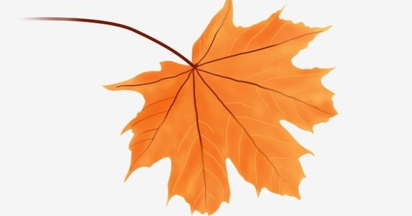 Hand Drawn Falling Autumn Leaves Red Maple Orange A Leaf Maple Leaf Clipart Hand Drawn Autumn Leaves Hand Drawn Maple Leaf Png Transparent Clipart Image And How To Draw Hands