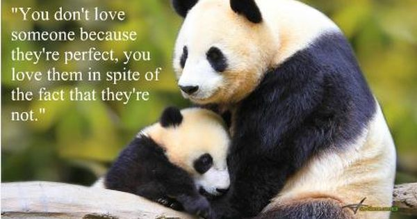 Cute animals with love quotes - photo#42