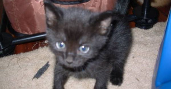 21++ What to feed a 7 week old kitten ideas