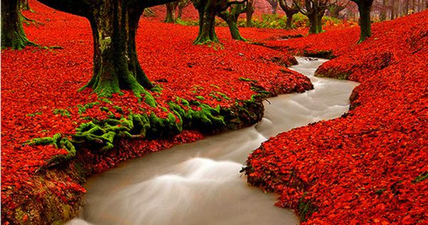Stunning Red Autumn Woods ~ Madeira, Portugal