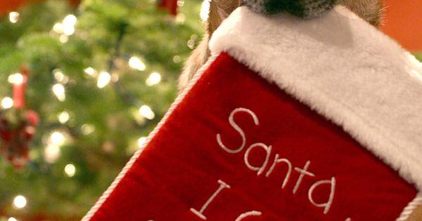 Santa i can explain stockings christmas merry christmas christmas pictures santa christmas