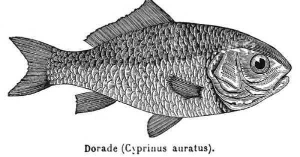 Clipart Fish Free Fish Drawings Fish Illustration Fish