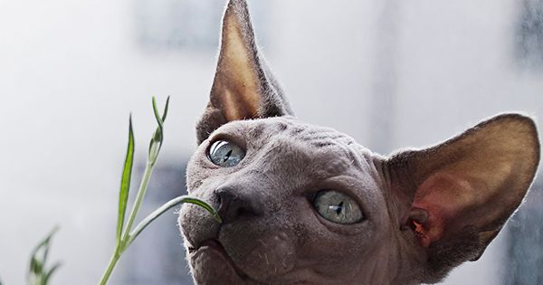Don T Know Where To Buy Some Kitty Grass Then Grow Some Of Your Own Here Is Our Guide On How You Can Grow Grass Indoors For Your Kitty