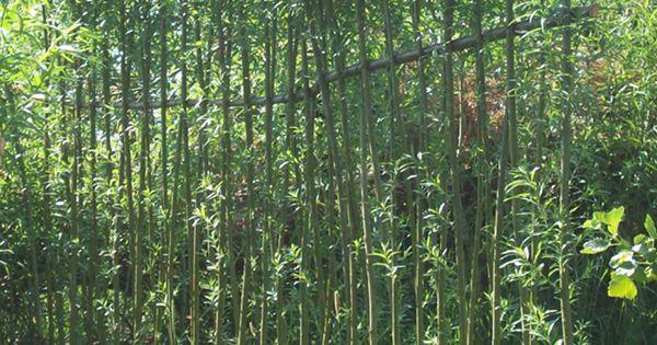 sichtschutzzaun weide living willow fence weidenzaun. Black Bedroom Furniture Sets. Home Design Ideas