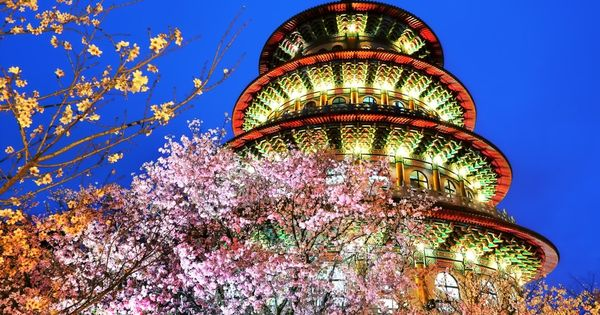 Cherry Blossom In Taiwan 2021 Forecast The Best Time 8 Best Places To See Cherry Blossoms In Taiwan Living Nomads Travel Tips Guides News Informat Cherry Blossom Places To See Taiwan