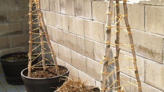 How To Build A Cucumber Trellis Small Budget Gardening