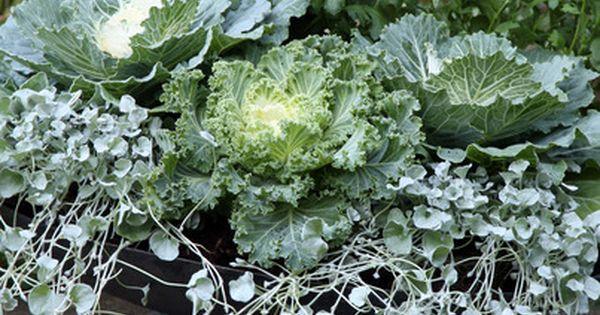 Jardiniere d hiver plantes pinterest automne for Jardiniere d hiver