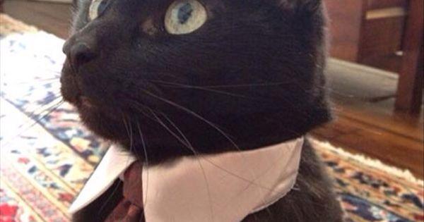 cat with tie collar resume dot cat kitten