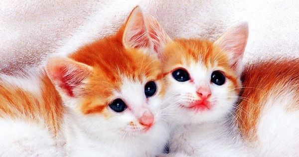 Cute Cats Hd Wallpapers Pictures Images Backgrounds Photos Cute Cat Wallpaper Cute Cats And Kittens Kitten Images