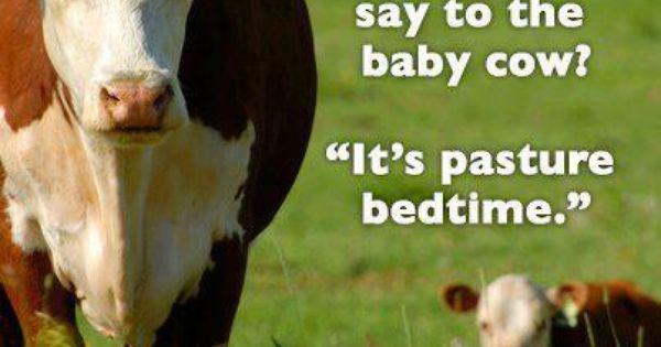Cow bedtime joke | Farm Funny | Pinterest | Jokes, Bedtime ...