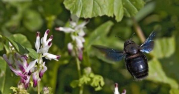 8c352c56c398ac5217bd7535b6687508 - How To Get Rid Of Bees Flying Around You