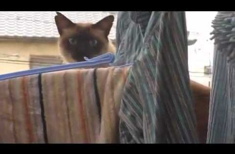 "Kitty Corliss ""Grinding the Crack"" Funniest cat video ever!!!!"