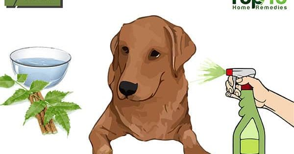 Home Remedies For Hot Spots On Dogs Top 10 Home Remedies Dog Allergies Dog Hot Spots Remedy Dog Hot Spots