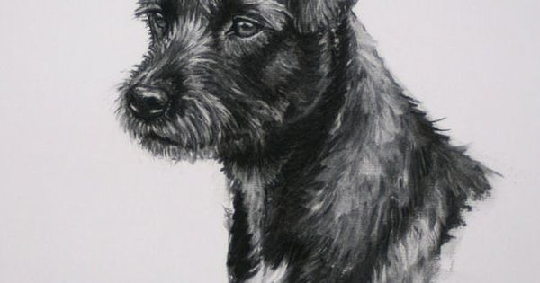 patterdale terrier dog fine art limited edition print from