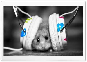 Dj Mouse Hd Wide Wallpaper For Widescreen Cute Hamsters Funny Animals Hamster