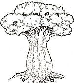 Honey Honey Lion Coloring Mural Baobab Tree African Tree African Art
