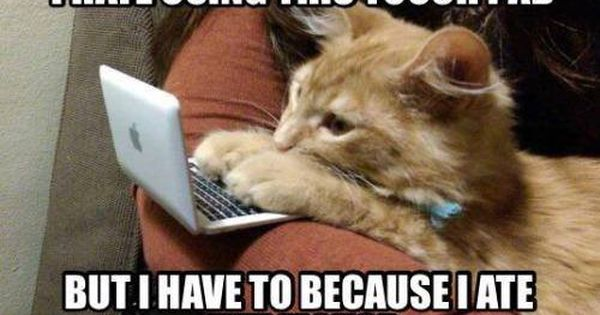Funny Cat Ate Mouse Meme Http Jokideo Com Funny Cat