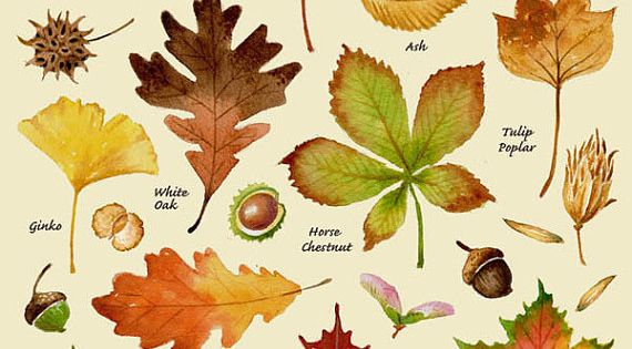 Autumn leaves print leaf varieties types of leaves seeds fall colors harvest leaf chart - Fall landscaping ideas a mosaic of colors shapes and scents ...