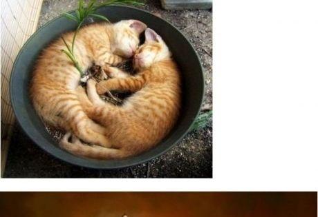 haha silly cats! I love cats too.